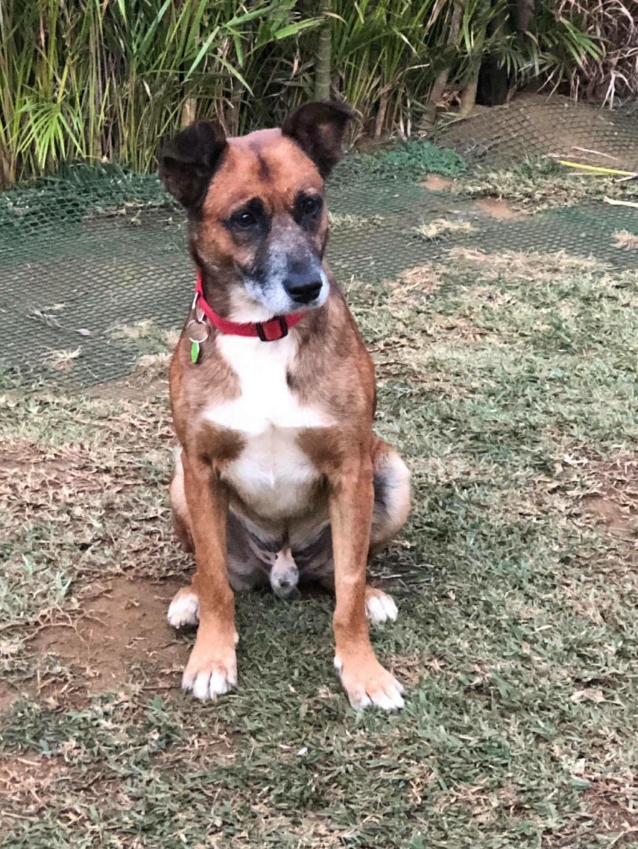 PAGNOL, chien de 6 ans environ, 20 kg 11943910