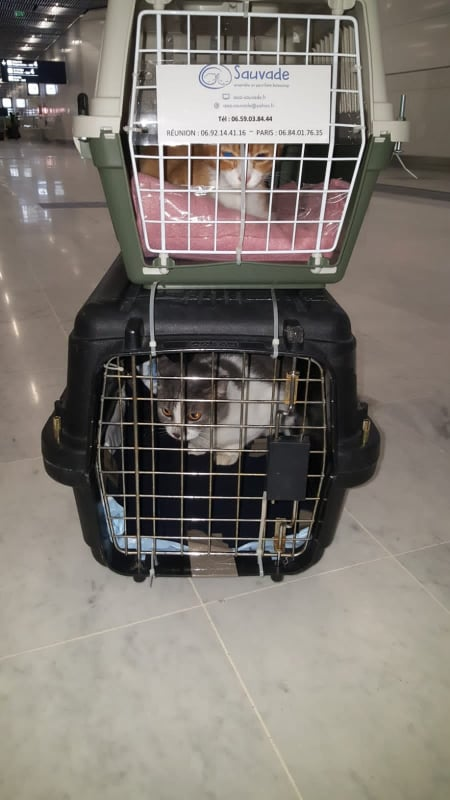 SAÏ, chat mâle gris et blanc de 3 ans environ - marrainé par Régine - Réservé par Louise 13672310