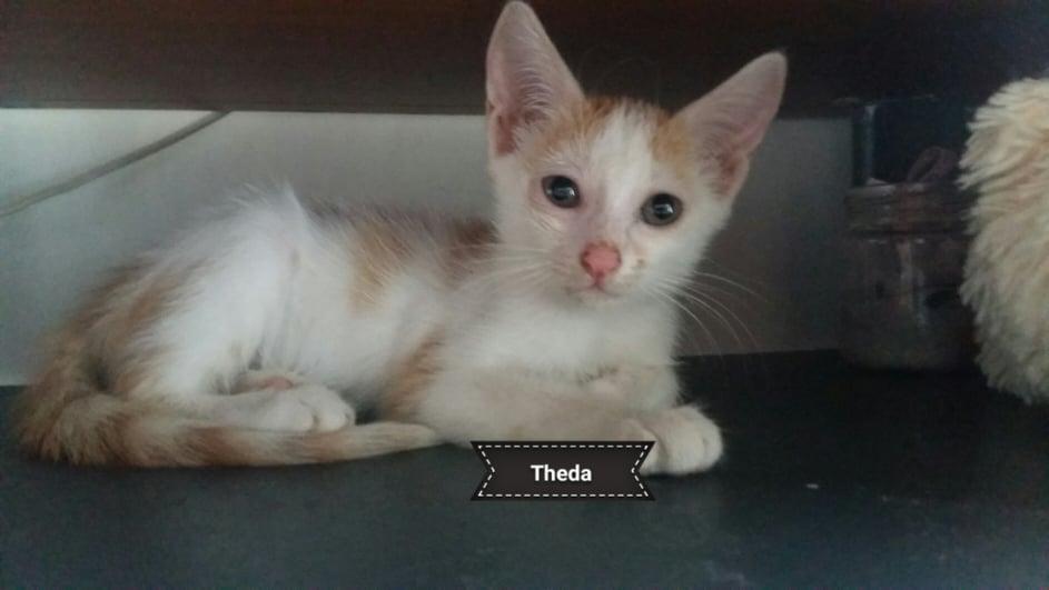 REIKI (Theda) 14084211