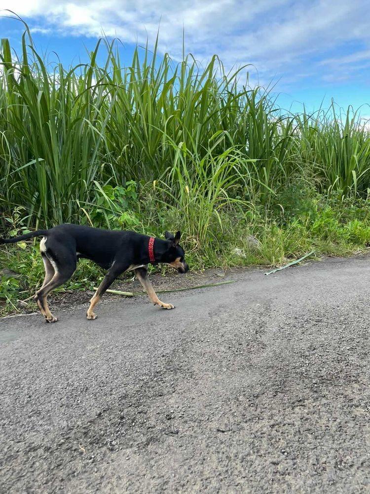 WELCOME, jeune chien mâle 1 an (né le 01/03/2020) - 24 kg - marrainé par Giulia 15717710