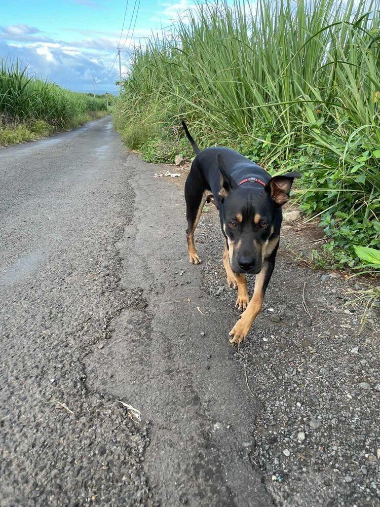 WELCOME, jeune chien mâle 1 an (né le 01/03/2020) - 24 kg - marrainé par Giulia 15728610