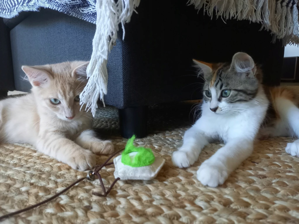 KHEOPS (Taiyo) et THETIS (Tsuki) 15747810