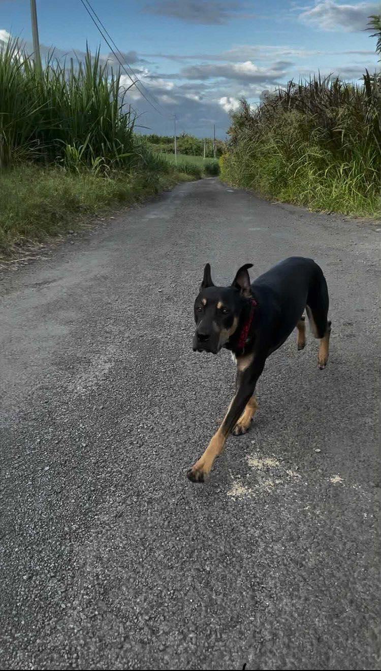 WELCOME, jeune chien mâle 1 an (né le 01/03/2020) - 24 kg - marrainé par Giulia 15780310