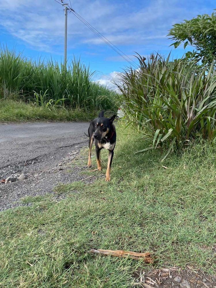 WELCOME, jeune chien mâle 1 an (né le 01/03/2020) - 24 kg - marrainé par Giulia 15801310