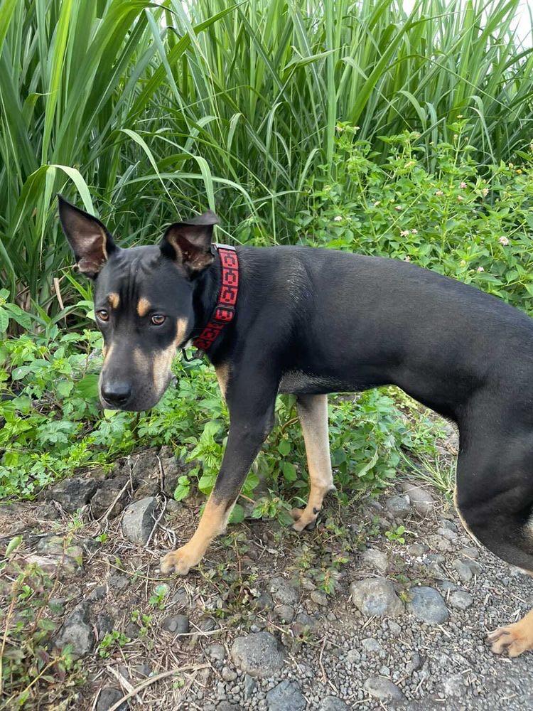 WELCOME, jeune chien mâle 1 an (né le 01/03/2020) - 24 kg - marrainé par Giulia 15903710