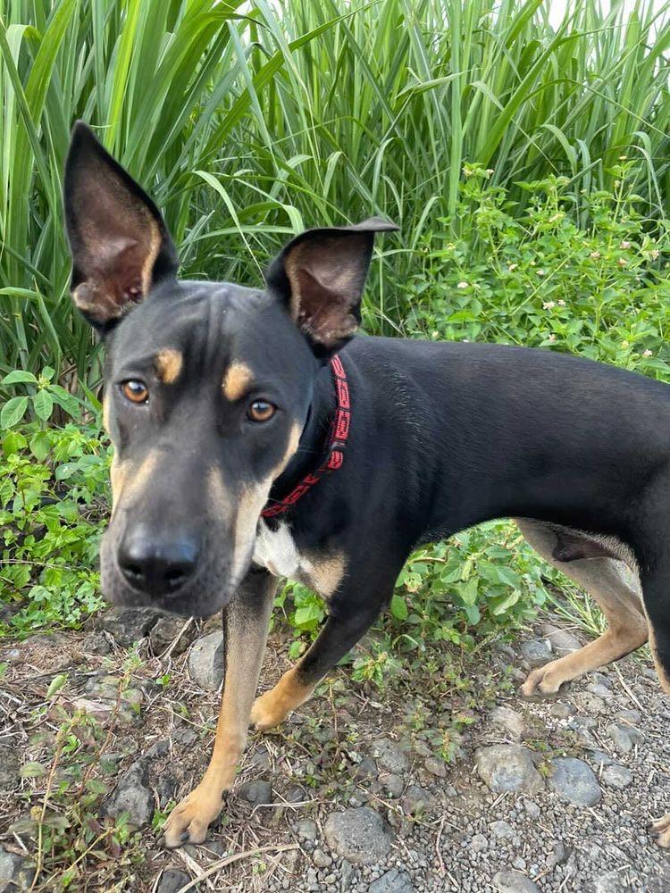 WELCOME, jeune chien mâle 1 an (né le 01/03/2020) - 24 kg - marrainé par Giulia 15912910