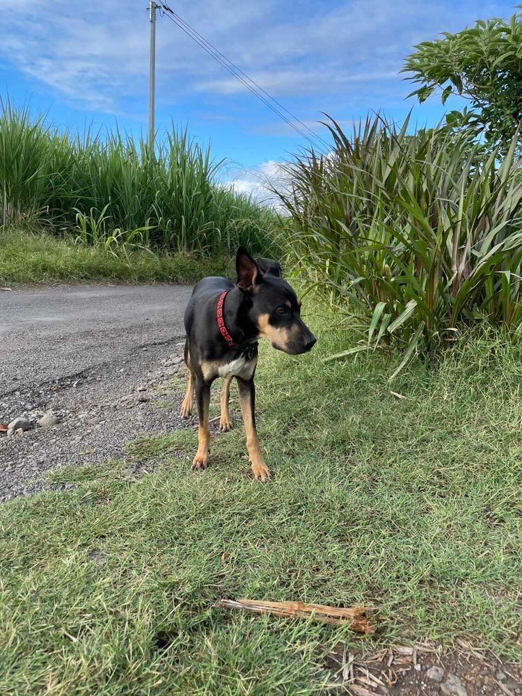 WELCOME, jeune chien mâle 1 an (né le 01/03/2020) - 24 kg - marrainé par Giulia 15918410
