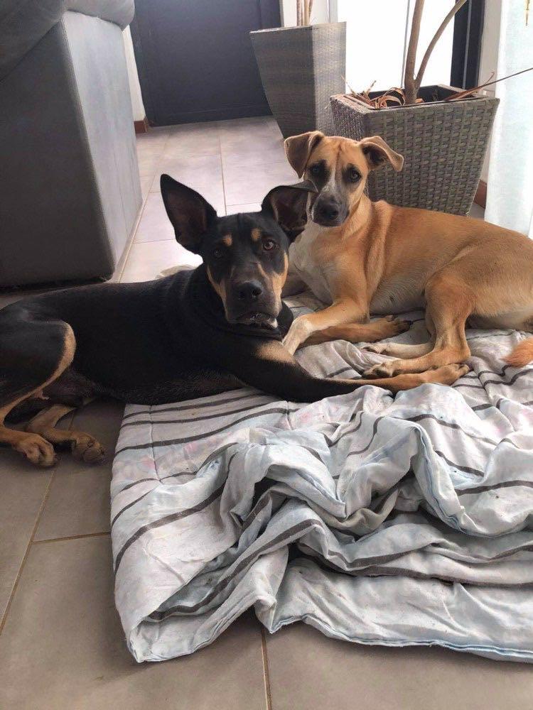 WELCOME, jeune chien mâle 1 an (né le 01/03/2020) - 24 kg - marrainé par Giulia 16291410