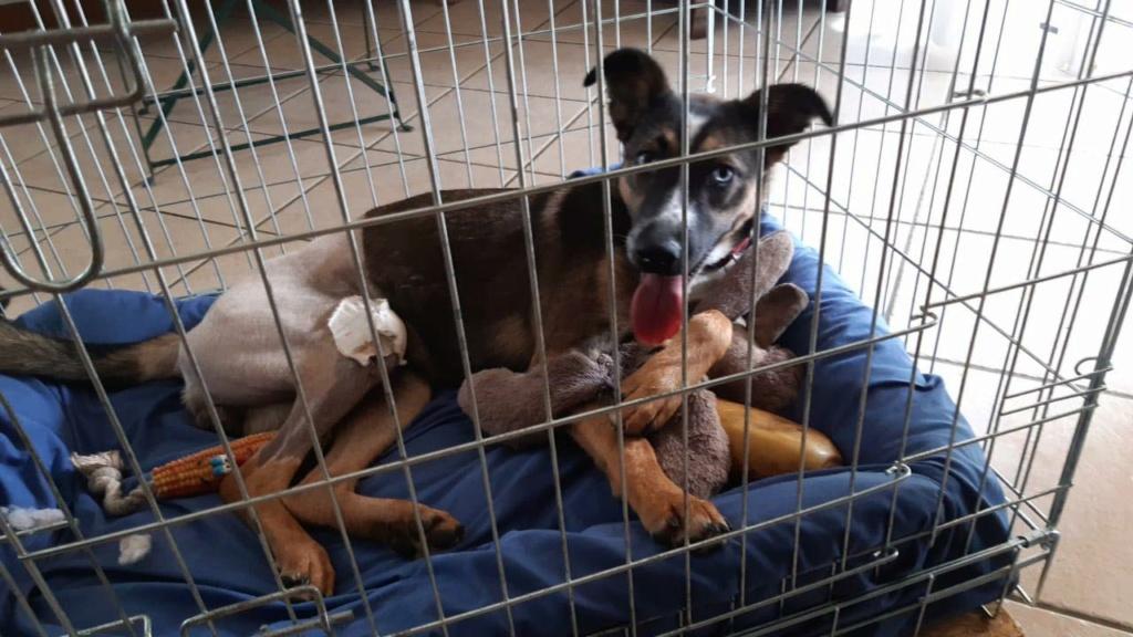LAGOON, jeune chienne femelle d'environ 7 mois - Marrainée par Pat84 - Réservée par Karine 16698210