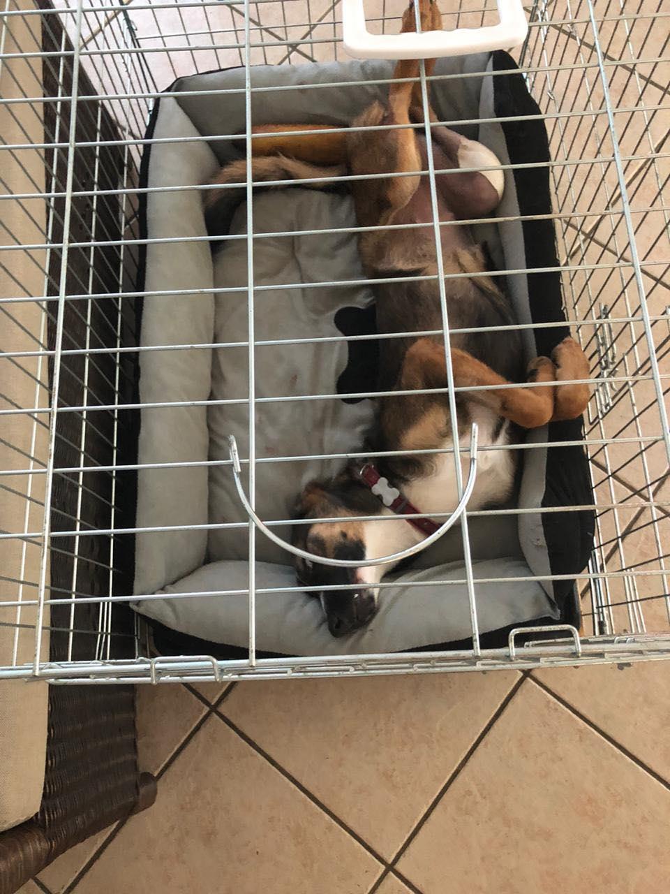 LAGOON, jeune chienne femelle d'environ 7 mois - Marrainée par Pat84 - Réservée par Karine 16837910