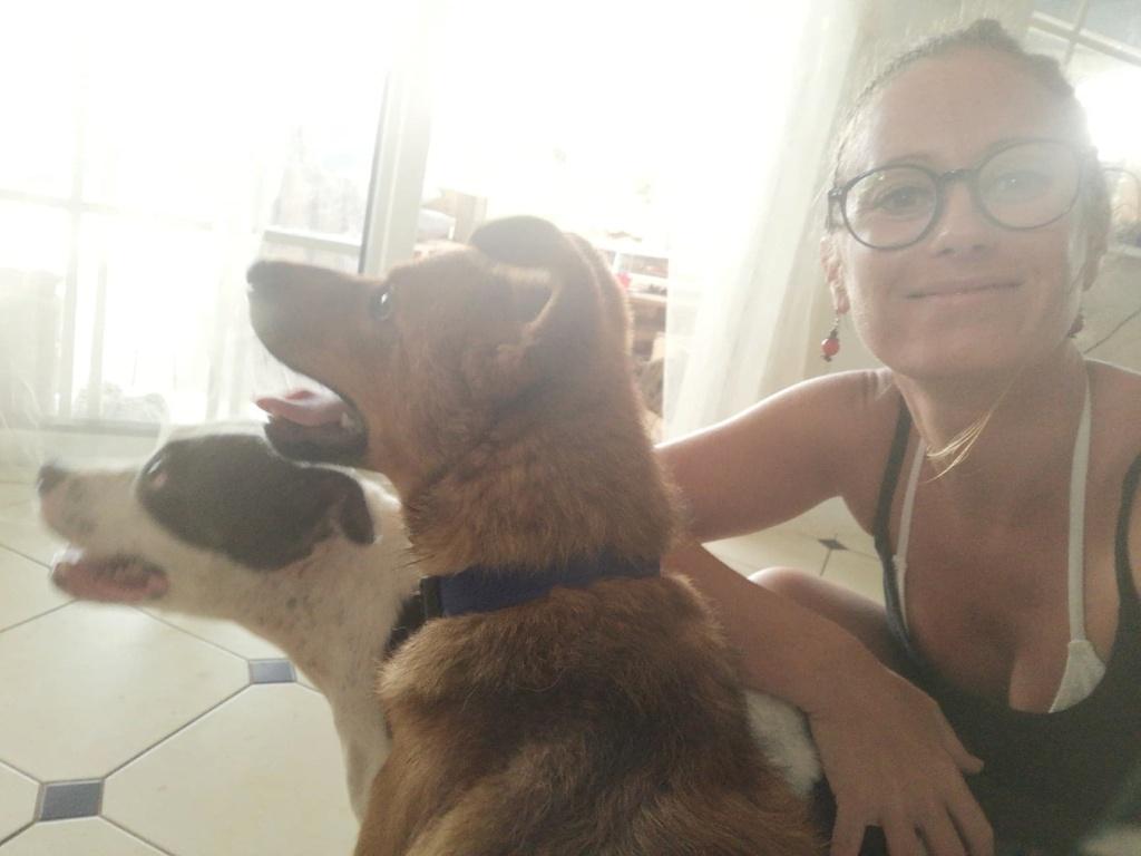 MAHOT, jeune chien mâle fauve de 1 an (né le 15/05/2020)-13 kg - Réservé par Noémie 18130910