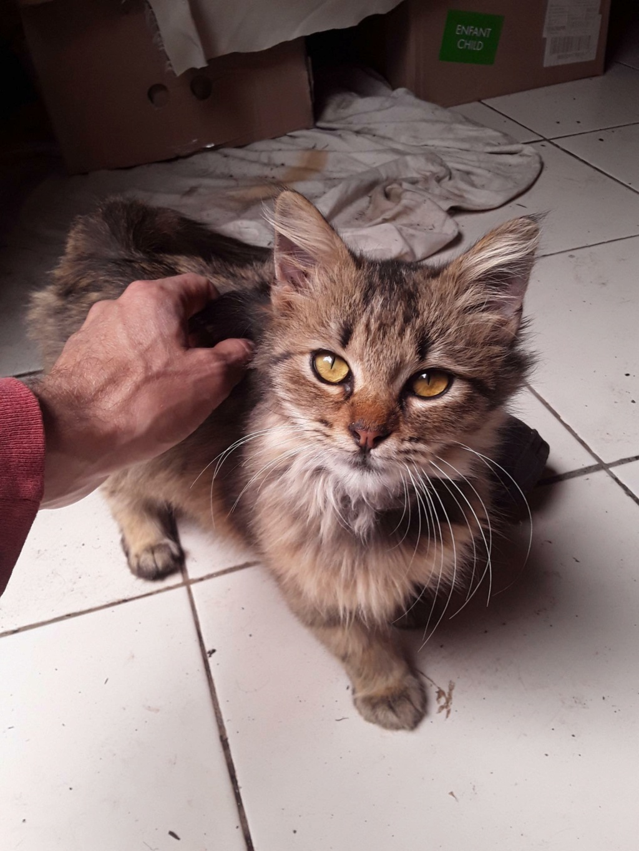 GISELE (Minicat) 18956910
