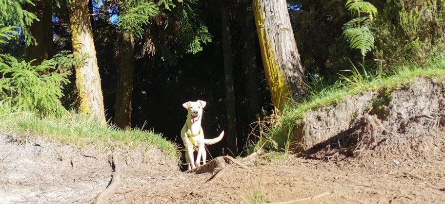 YARI, jolie chienne blanche 1 an (née le 01/06/2020) - 13 kg - Marrainée par Pat84 18999410