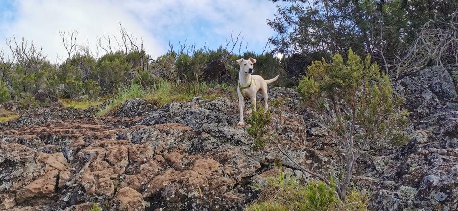 YARI, jolie chienne blanche 1 an (née le 01/06/2020) - 13 kg - Marrainée par Pat84 19105910
