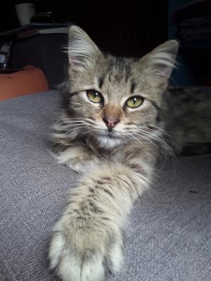 GISELE (Minicat) 19118410