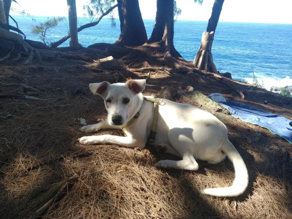 YARI, jolie chienne blanche 1 an (née le 01/06/2020) - 13 kg - Marrainée par Pat84 19180110
