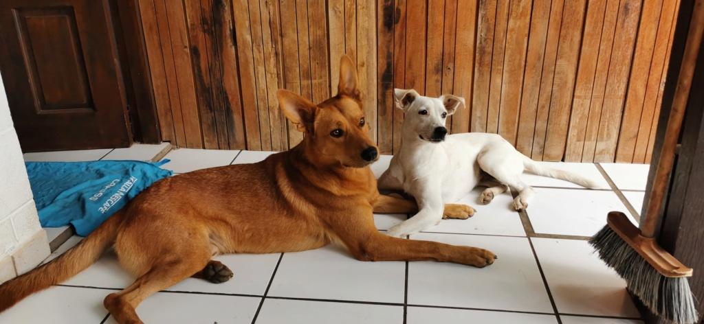 YARI, jolie chienne blanche 1 an (née le 01/06/2020) - 13 kg - Marrainée par Pat84 19765010