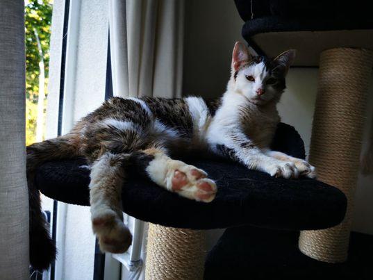 BILBO chaton mâle tigré et blanc 4 mois, né le 07/01/2021 19827310