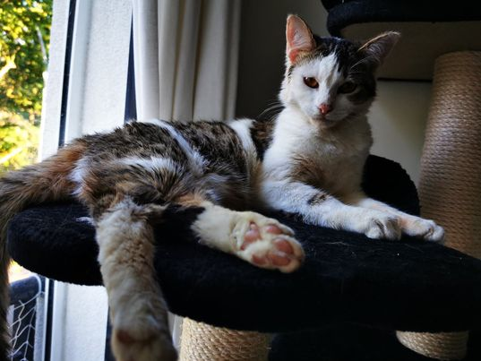 BILBO chaton mâle tigré et blanc 4 mois, né le 07/01/2021 19980910