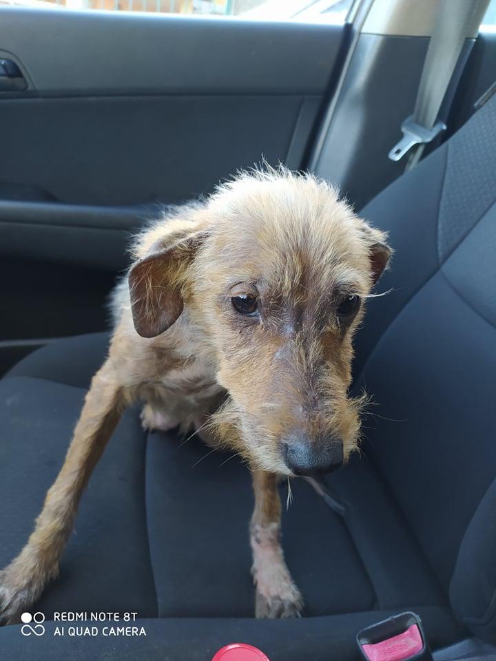 TITO, jeune chien de 6/8 mois environ pour 5,3 kg 20443211