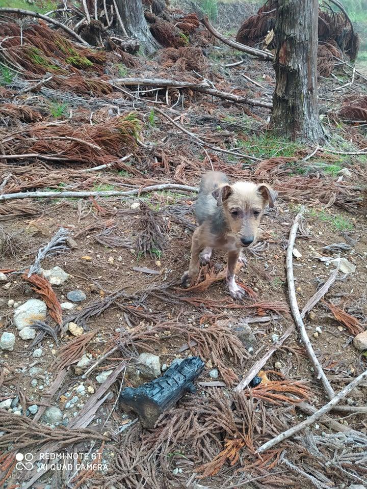 TITO, jeune chien de 6/8 mois environ pour 5,3 kg 20505311
