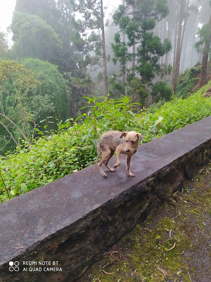 TITO, jeune chien de 6/8 mois environ pour 5,3 kg 20532810