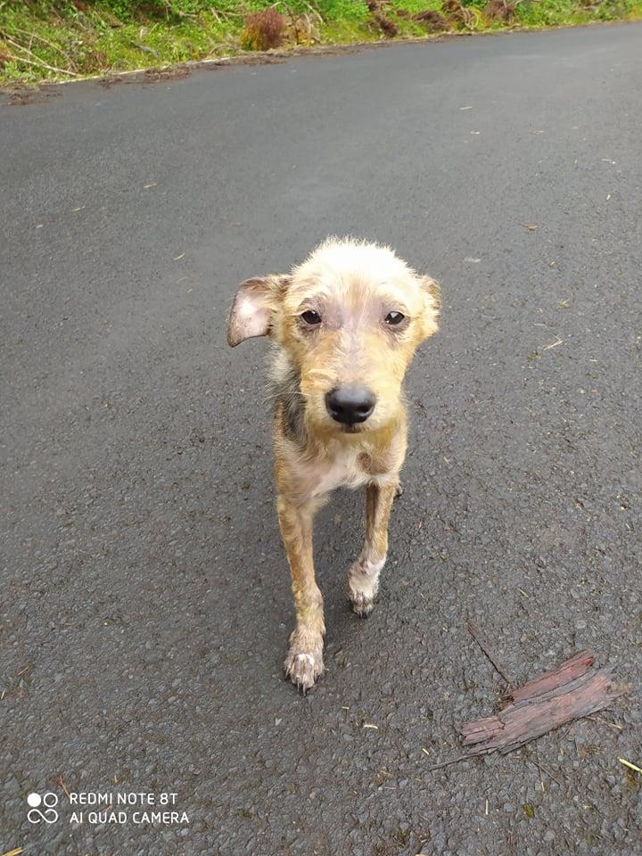 TITO, jeune chien de 6/8 mois environ pour 5,3 kg 20560710