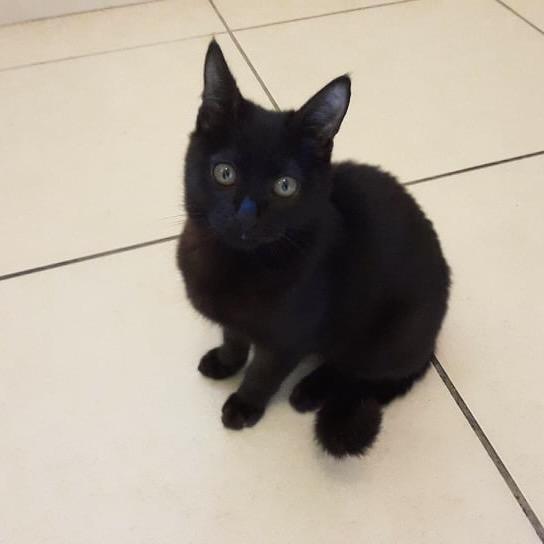 SALAMBÔ, chaton noir de 5 mois (né le 16/02/2021) 20613911