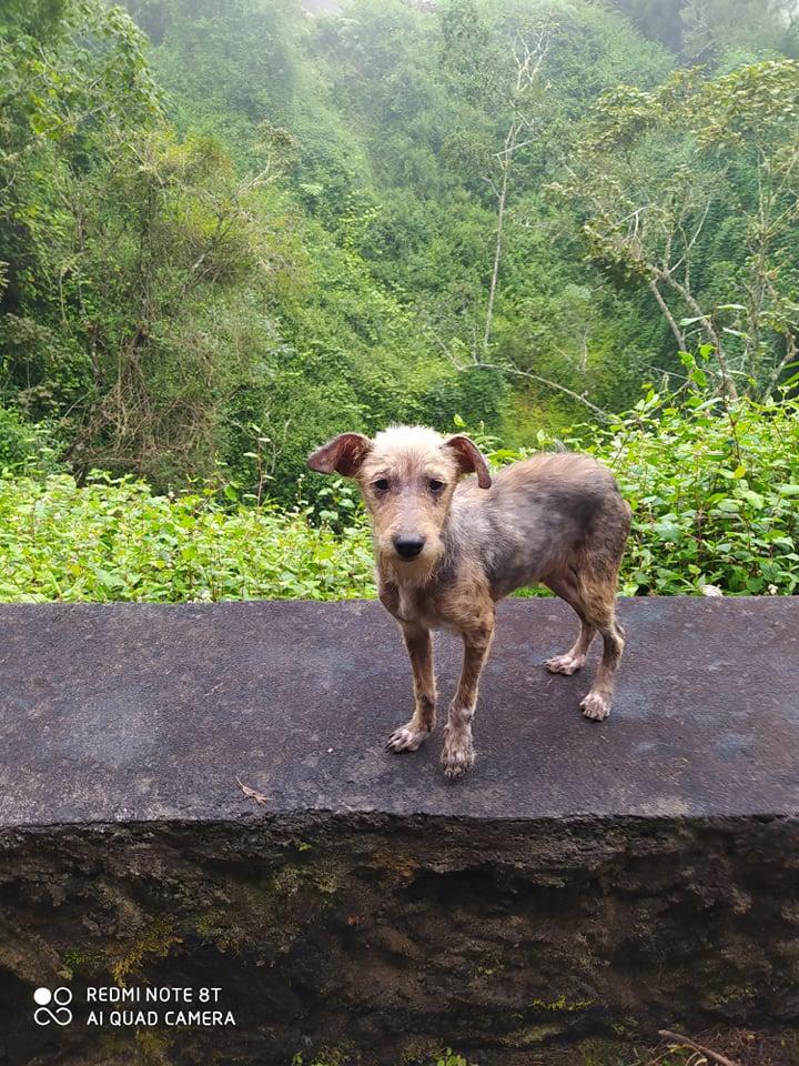 TITO, jeune chien de 6/8 mois environ pour 5,3 kg 20639111