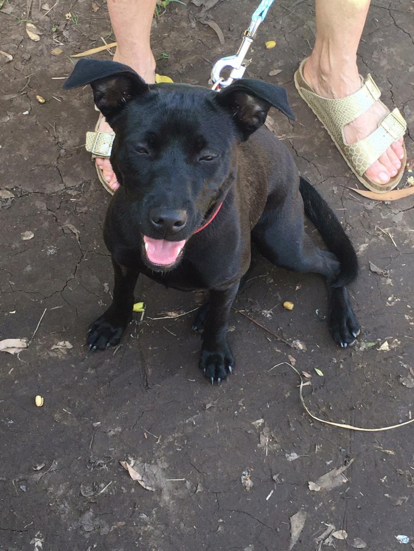 TIKI, jeune chienne noire de 8 mois pour 11 Kg 20684610