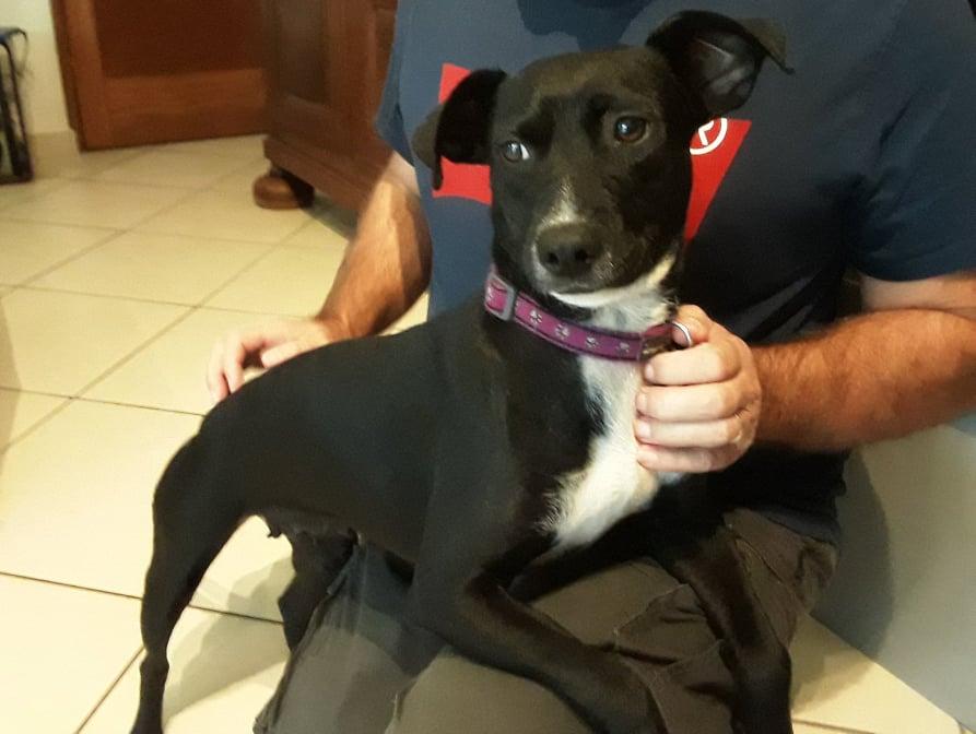 BELLA, chienne noire de 1,5 an environ pour 11 Kg - Marrainée par Steffi et Maud 20761610