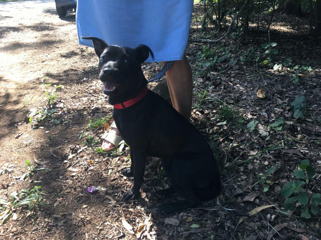 TIKI, jeune chienne noire de 8 mois pour 11 Kg 20871710