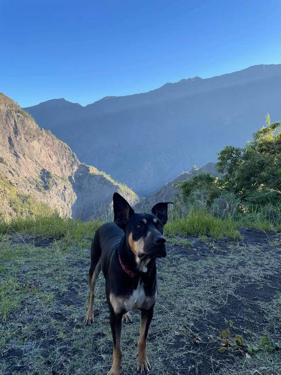 WELCOME, jeune chien mâle 1 an (né le 01/03/2020) - 24 kg - marrainé par Giulia 20895610