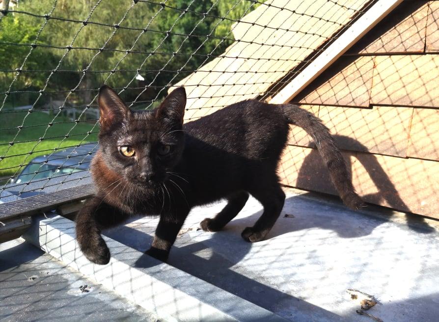 SALAMBÔ, chaton noir de 5 mois (né le 16/02/2021) 21128010