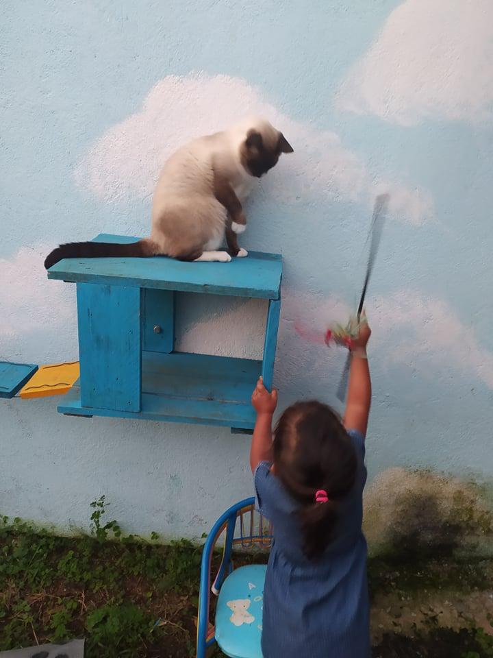 CAPUCCINO, chat mâle typé siamois de 7 ans 21192310