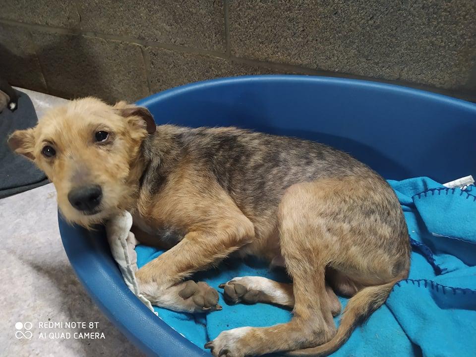 TITO, jeune chien de 6/8 mois environ pour 5,3 kg 21762212