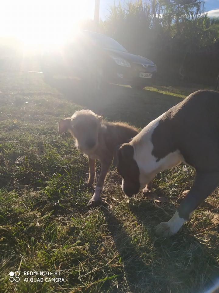 TITO, jeune chien de 6/8 mois environ pour 5,3 kg 21990711