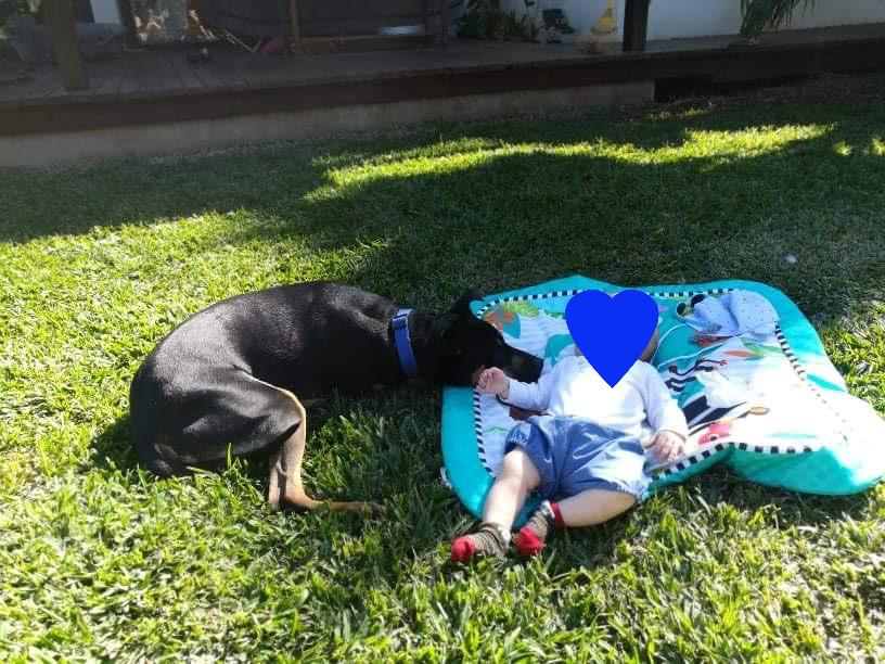 WELCOME, jeune chien mâle 1 an (né le 01/03/2020) - 24 kg - marrainé par Giulia 22470410