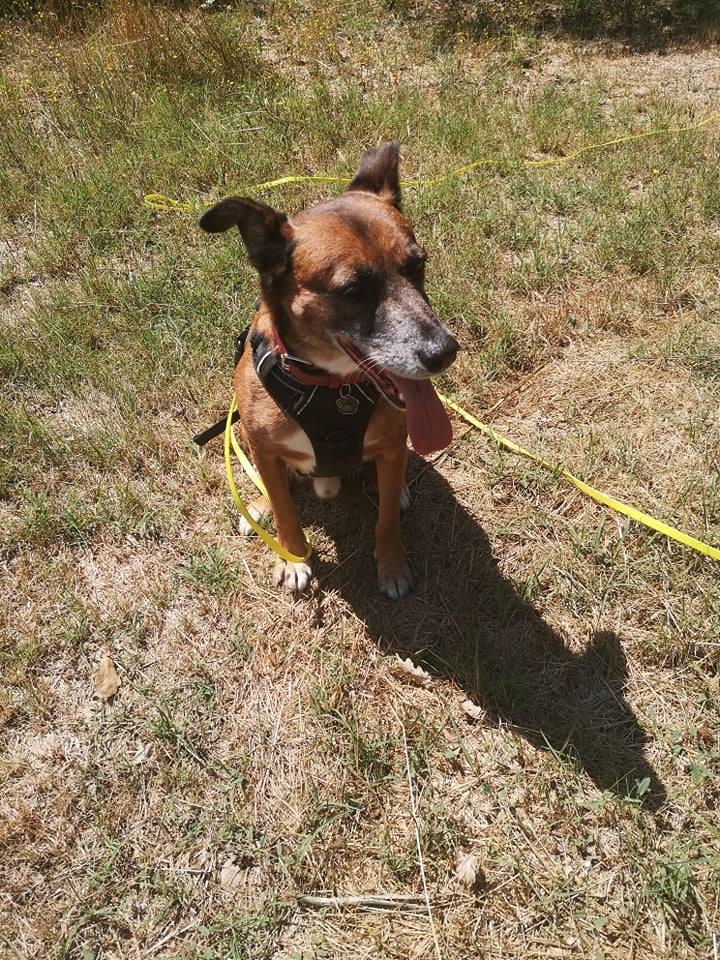 PAGNOL, chien de 7 ans environ pour 20 kg - Marrainé par Pat84 23173410