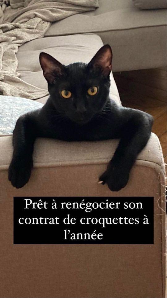 COUSCOUS (Corneille) 23533310