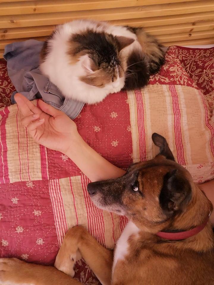 PAGNOL, chien de 7 ans environ pour 20 kg - Marrainé par Pat84 23631210