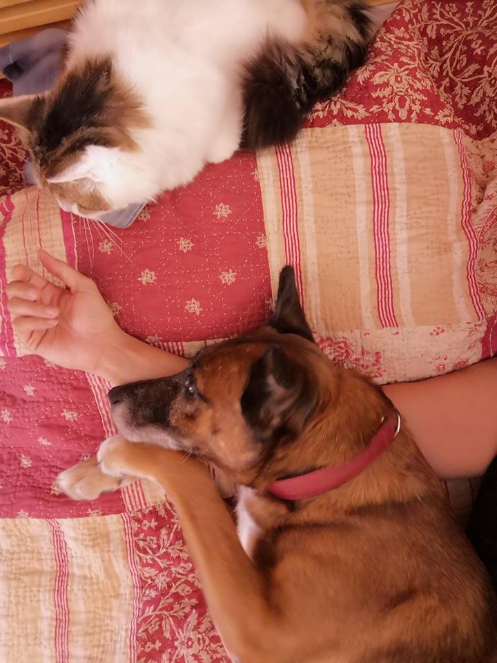 PAGNOL, chien de 7 ans environ pour 20 kg - Marrainé par Pat84 23640810