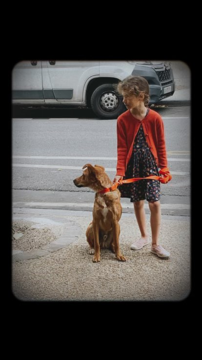MAHOT, jeune chien fauve de 1 an environ - Marrainé par Coralie - Réservé par Marion et sa famille 24043910