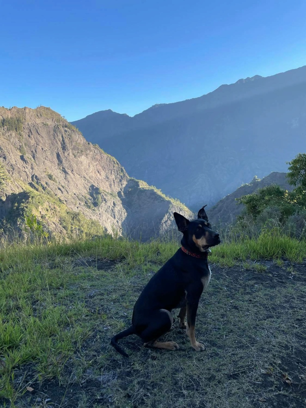 WELCOME, jeune chien mâle 1 an (né le 01/03/2020) - 24 kg - marrainé par Giulia 24228710