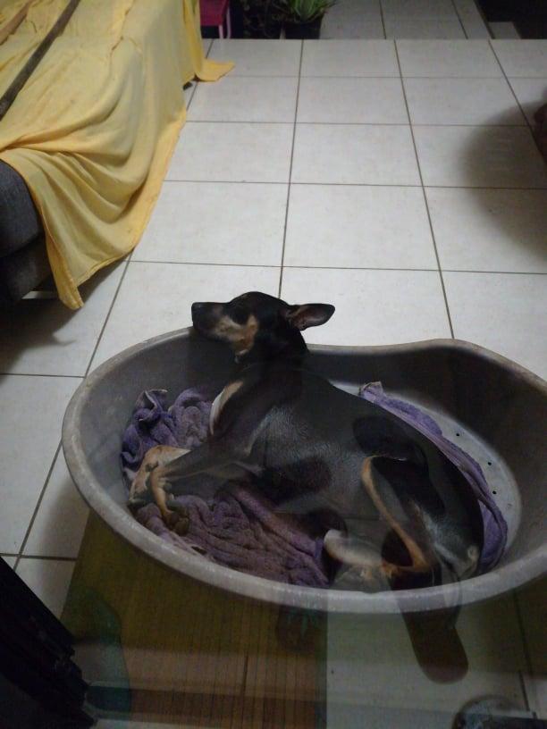 WELCOME, jeune chien mâle 1 an (né le 01/03/2020) - 24 kg - marrainé par Giulia 24238410