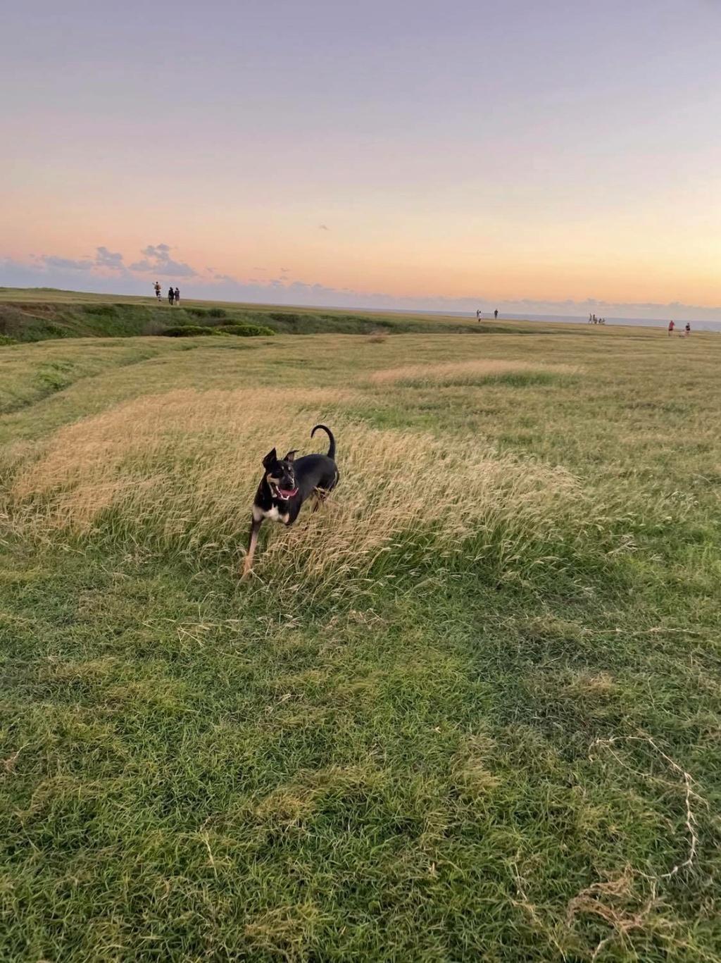 WELCOME, jeune chien mâle 1 an (né le 01/03/2020) - 24 kg - marrainé par Giulia 24238710