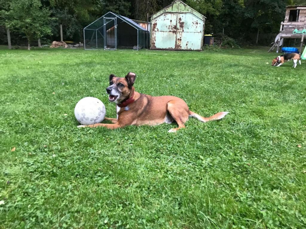 PAGNOL, chien de 7 ans environ pour 20 kg - Marrainé par Pat84 24238811