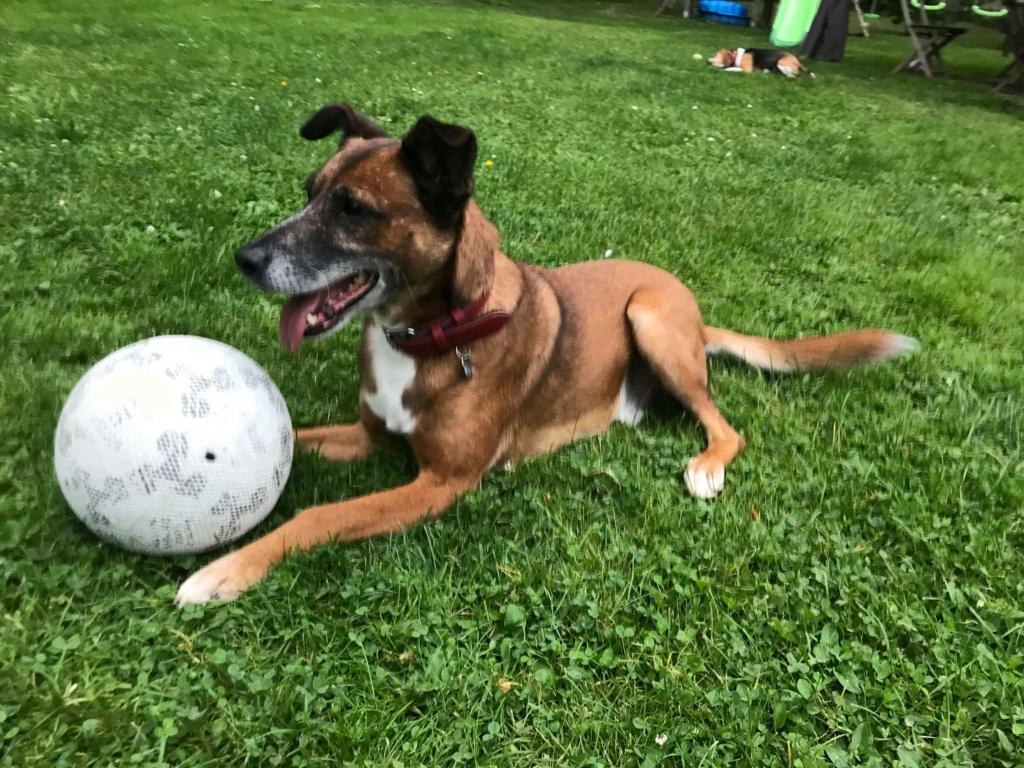 PAGNOL, chien de 7 ans environ pour 20 kg - Marrainé par Pat84 24239010