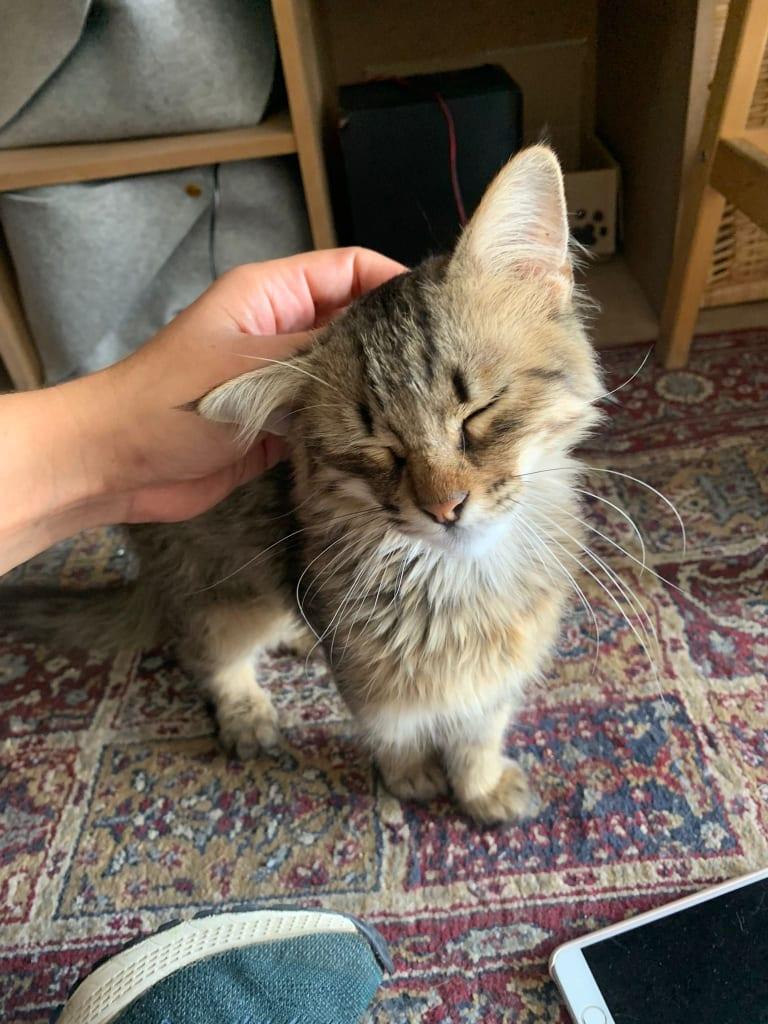 GISELE (Minicat) 24239810