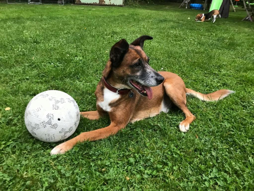 PAGNOL, chien de 7 ans environ pour 20 kg - Marrainé par Pat84 24240010